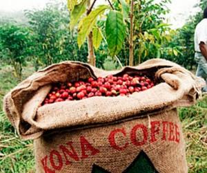 Фестиваль кофе Кона